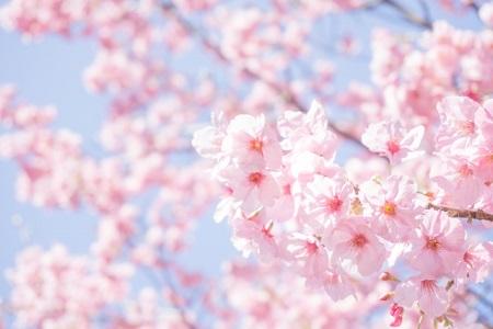 花見 持ち寄り