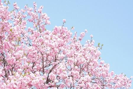 花見 東京