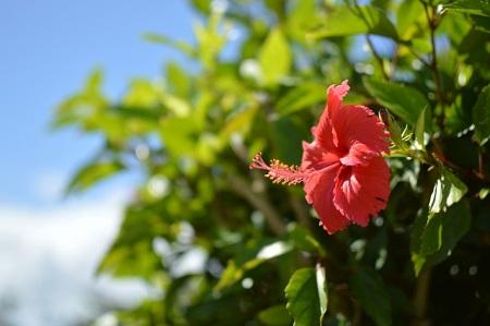 お盆 沖縄